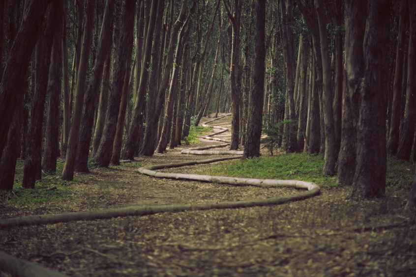 finding a path through the woods